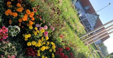 Fleurissement à l'entrée du village