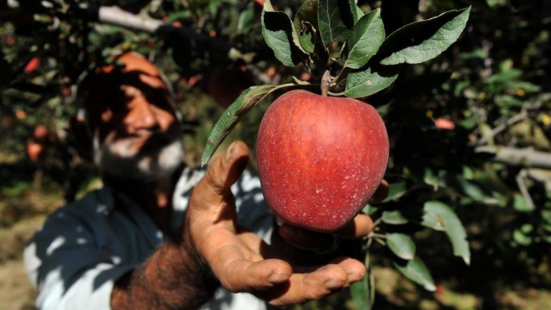Les arboriculteurs font du Jus de pomme avec les écoliers